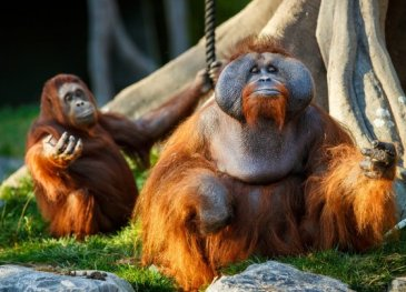 Animals relaxing at Dublin Zoo