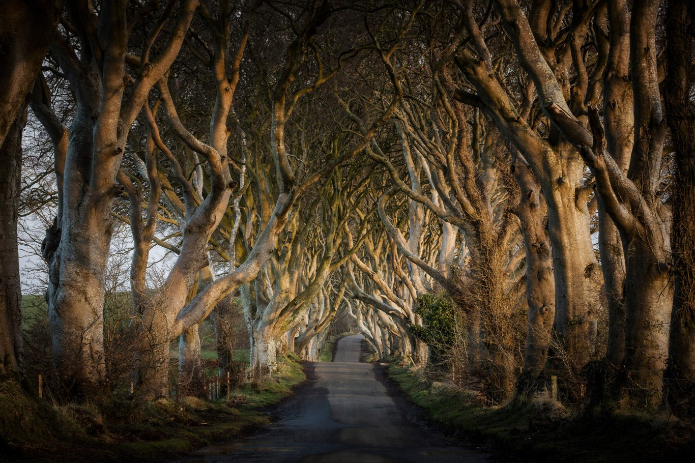The Dark Hedges Game of Thrones Day Tour from Belfast