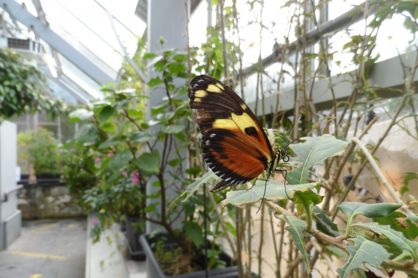 Butterfly in Butterfly House at Malahide Gardens
