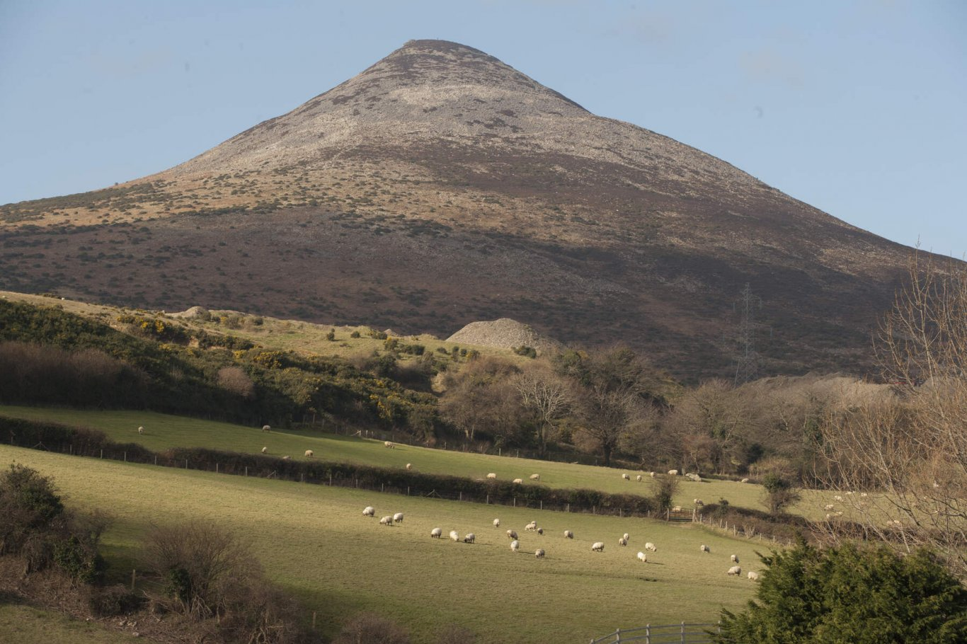 Sugarload mountain with sheep in foreground